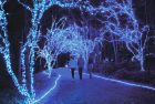 4 Amazing Christmas Light Displays You Must See